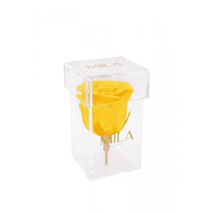 Mila Acrylic Single Stem
