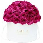 Mila-Roses-01552 Mila Classique Large Dome White - Fuchsia