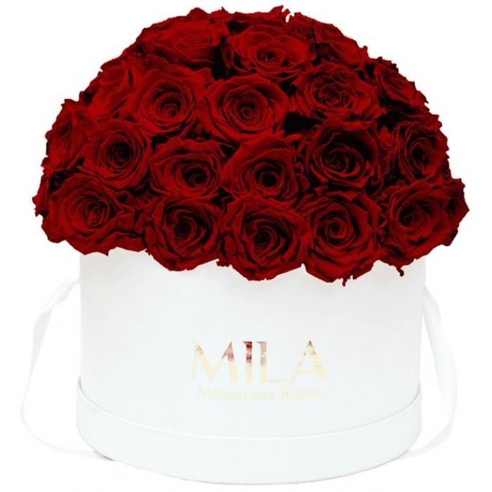 Mila Classique Large Dome White - Rubis Rouge
