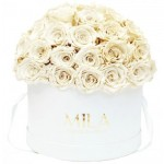 Mila-Roses-01572 Mila Classique Large Dome White - White Cream