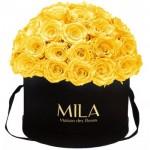 Mila-Roses-01587 Mila Classique Large Dome Black - Yellow Sunshine