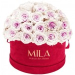Mila-Roses-01604 Mila Classique Large Dome Burgundy - Pink bottom