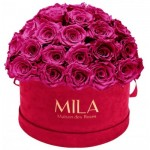 Mila-Roses-01606 Mila Classique Large Dome Burgundy - Fuchsia