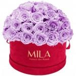 Mila-Roses-01610 Mila Classique Large Dome Burgundy - Lavender