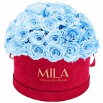 Mila-Roses-01613 Mila Classique Large Dome Burgundy - Baby blue