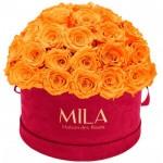 Mila-Roses-01619 Mila Classique Large Dome Burgundy - Orange Bloom