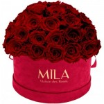 Mila-Roses-01620 Mila Classique Large Dome Burgundy - Rubis Rouge