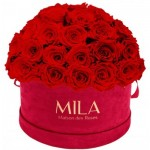 Mila-Roses-01621 Mila Classique Large Dome Burgundy - Rouge Amour