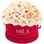 Mila-Roses-01622 Mila Classique Large Dome Burgundy - Pure Peach