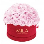 Mila-Roses-01623 Mila Classique Large Dome Burgundy - Pink Blush
